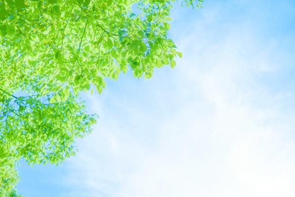 朝ときらきら輝く緑
