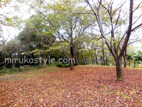 緑と落ち葉