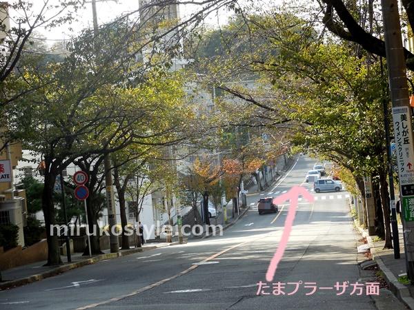 春は桜のアーチ