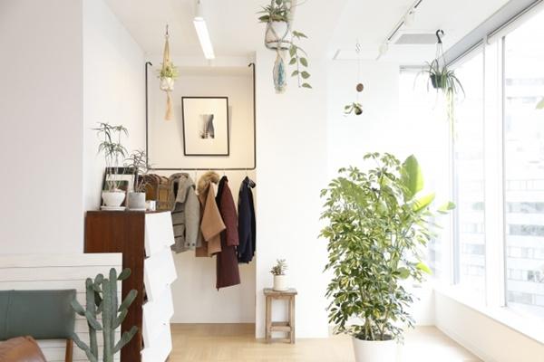 白を基調とした部屋と観葉植物